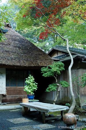 Kyotoaki011