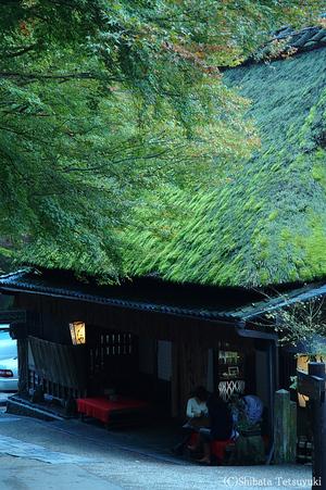 Kyotoaki017